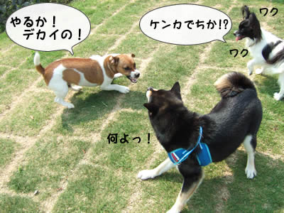 野次犬1匹