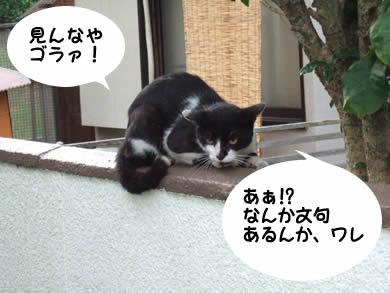 なんで猫は関西弁になるのか