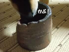 黒いものが!!