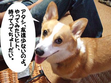 犬なんか!
