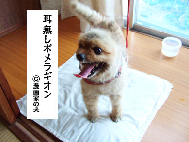 ゴンちゃん・ポメ