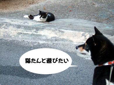 ネコにらむ