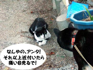 ネコ逃げない