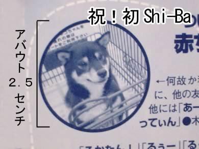 shi-ba11月号56.58P