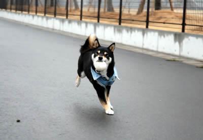 あず走ります!