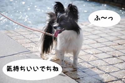 今日は暑いでち