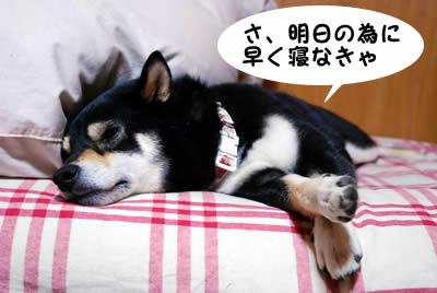 ぐーぐー寝てます