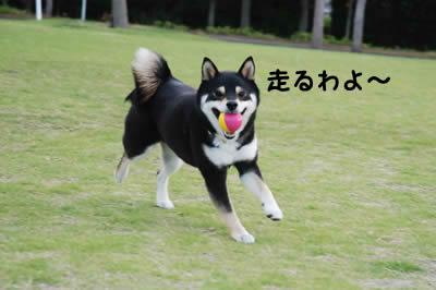 かっこいい飛行犬を撮りたかったのに