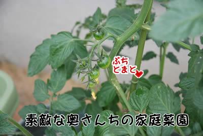 20070528_0210.jpg