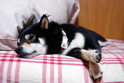 いつもどおりベッドでオヤスミ