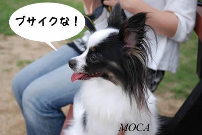 モカちゃん天使