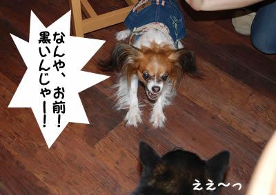 20070828_0012.jpg