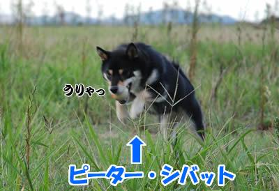 20070926_0004.jpg