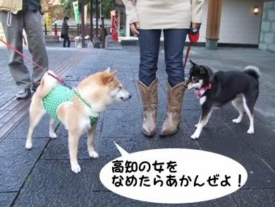 高知弁イカス!