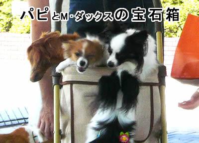 パピの宝石箱や~(彦丸風)