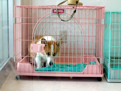 五月蝿い犬NO.1