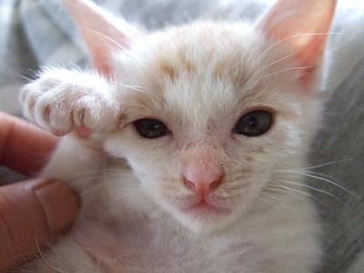 ショボいまねき猫