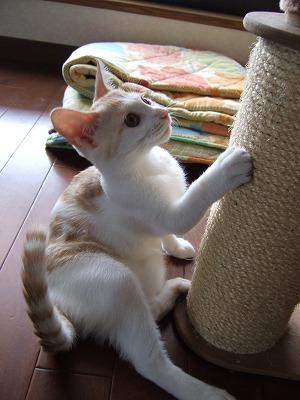 2007_0930nayupeko0058.jpg