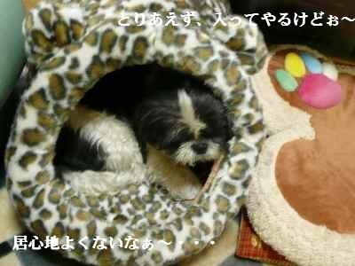 A3_20071012021357.jpg
