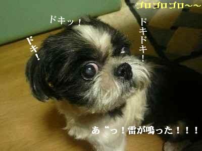 A4_20070912204915.jpg