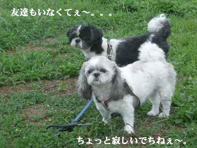 b4_20070911210128.jpg