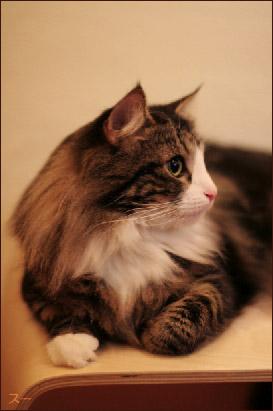 cat015.jpg