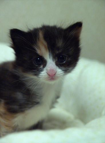 cat025.jpg