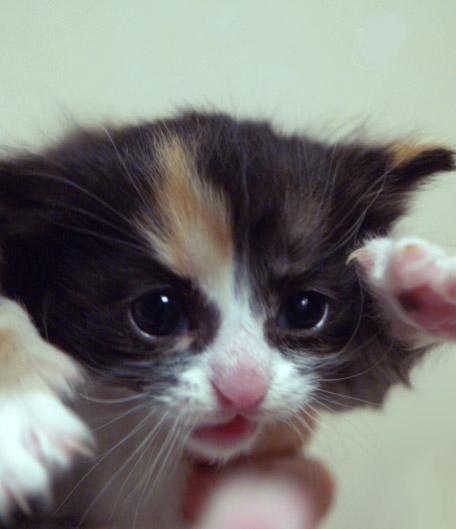 cat027.jpg