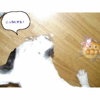 20060223002839.jpg