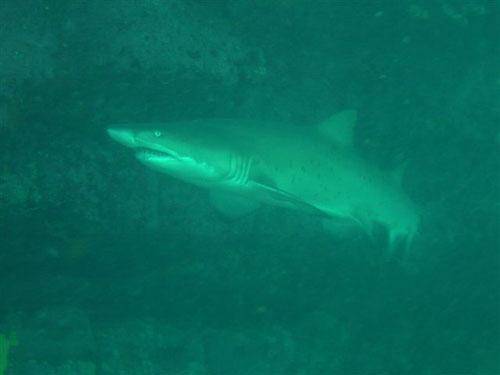 sharkphoto2.jpg