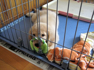 おもちゃとナナ