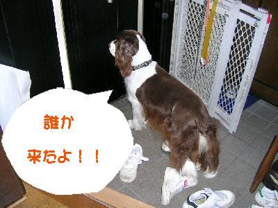 dog001-1.jpg