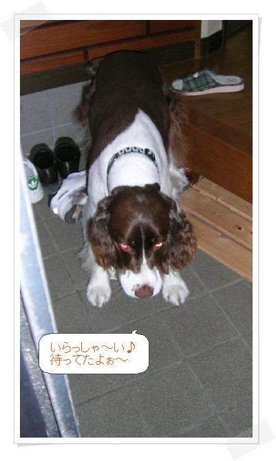 dog015-a.jpg