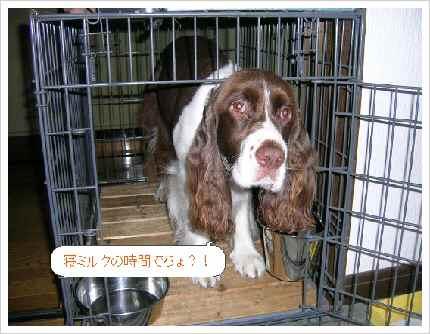 dog025-1.jpg