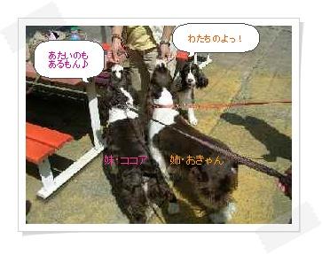 dog029-2.jpg