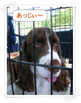 dog031-1.jpg