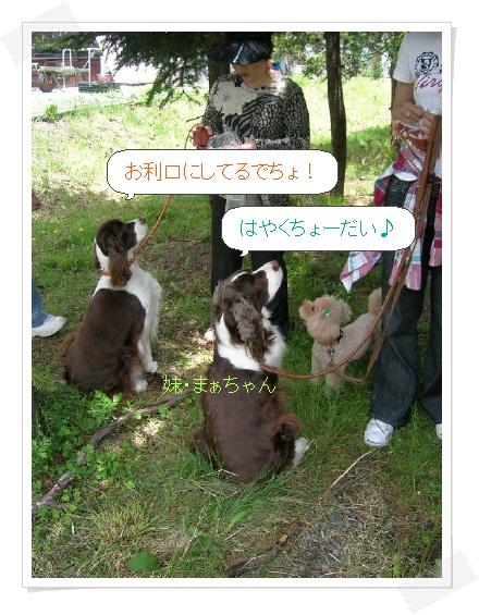 dog047-1.jpg
