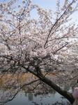 ueno_sk4_R.jpg