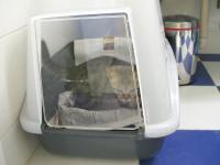 猫トイレ 5