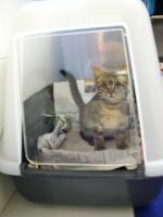 猫トイレ 6