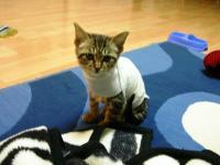 Tシャツ・・・っぽいw