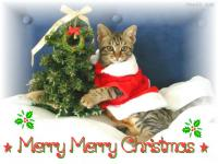 ゚*☆*゚*★Merry Merry Christmas ★*゚*☆*゚