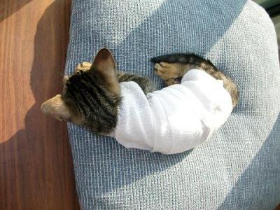 12月7日 またまたミイラ猫に変身。しかも3頭身