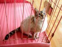ペットショップの猫ちゃん