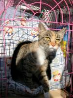 ペット用品店の外飼い猫ちゃん