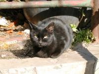 ペット市場の野良猫ちゃん