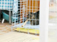 ペット用品店の飼い猫ちゃん