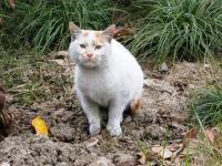 上海の野良猫ちゃん