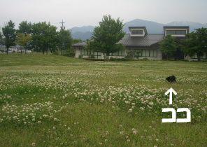 2006061014.jpg