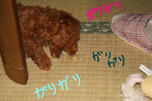 20070718-3.jpg